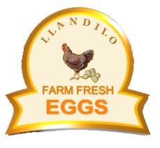 Llandilo Farm Fresh Eggs