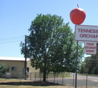 Tennessee Orchard